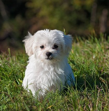 Protect Your Pet's Health From Chronic Inflammation | www.serrapeptase.info