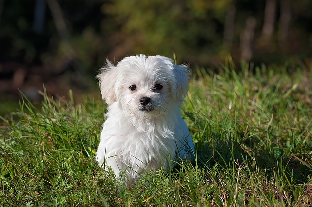 Protect Your Pet's Health From Chronic Inflammation