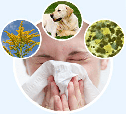 Suffering with Allergies? Try These Natural Antihistamines!